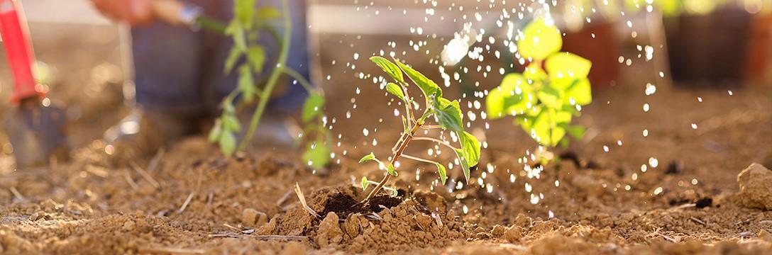 Duurzaam tuinieren: respectvol omgaan met de natuur in 6 stappen